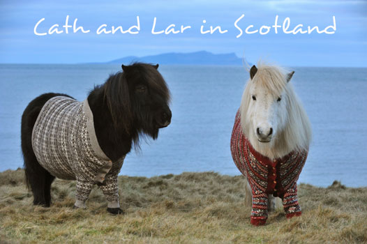 shetland-ponies-cardigans
